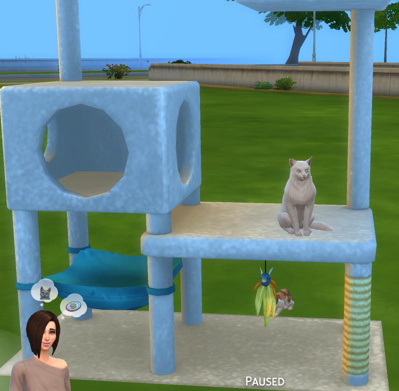 Solved: Sims 4 Cats And Dogs   Cats Not Using Scratching Post   Answer HQ