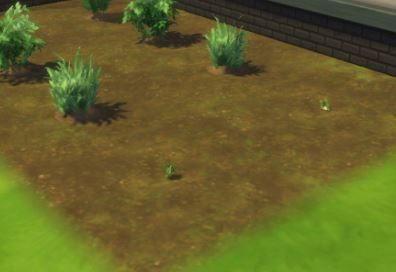 tiny plants.JPG