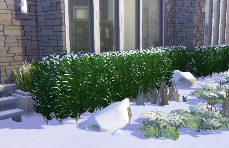 winter hedge 3.JPG