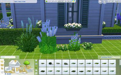 Plantsflowers.jpg