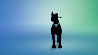 My Sim dog blacked out