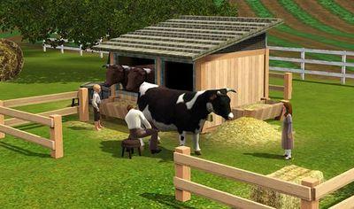 cow dairy.JPG