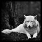 alphawolf35